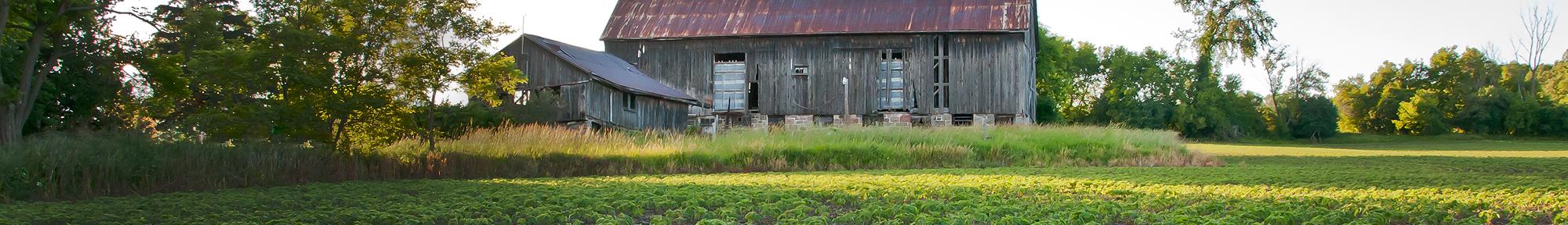 old barn in farmer's field