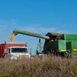 Combine harvester filing a waiting truck with grain.